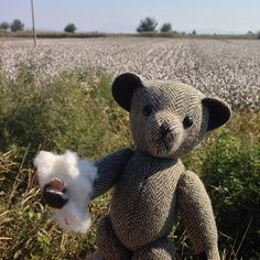 Down in the #cottonfields of #Turkey #TweedyTed was amazed to find that the cotton bolls were just like he buys at home!! #pamukkale #Bearsontour #tedsontour#harristweed