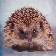 hedgehog gifts picture wall art canvas 48x48 cm NEW