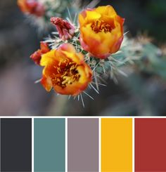 Desert Dusk - Color Palette by NewPro Containers