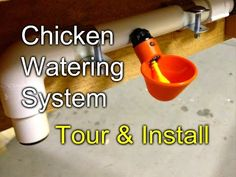 Chicken Watering: Tour and Install of my gravity fed system - YouTube
