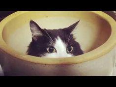 おはちの秘密基地。おはちだけに鉢が・・・。