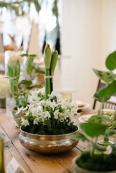Soft white and spring bulbs for a living #centerpiece