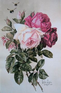 FREE SHIP Print  French Cabbage Roses Paul by VictorianRosePrints, $11.99