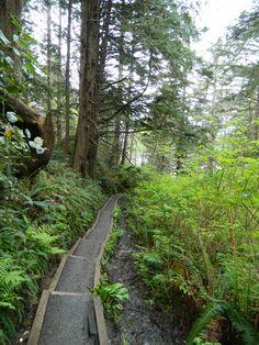 A Path to Second Beach, La Push Washington
