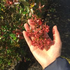 [Miyazaki 2015] 미야자키 신사 앞 어느 길가. 울타리 나무에 꽃이 예뻐서. 번듯한 관광지는 가지 않았다. 그냥 햇살이 밝고, 날씨가 따뜻하고, 사람들이 아기자기 사는 어떤 동네를 보러갔다.