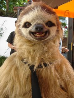 This sloth is wearing a tie