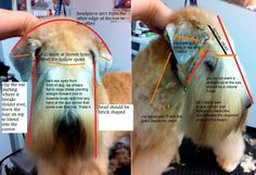 Like this description for grooming a wheaten head Dog Grooming Styles, Dog Grooming Shop, Grooming Salon, Pet Shop, Wheaten Terrier, Fox Terrier, Terriers, Shih Tzu, Creative Grooming