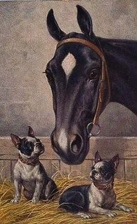 Boston terrier dogs and horse in stable lovely vintage style dog print poster Boston Terrier Kunst, Boston Terrier Love, Boston Terriers, Terrier Breeds, Dog Breeds, Terrier Dogs, Boston Art, Vintage Dog, Vintage Style