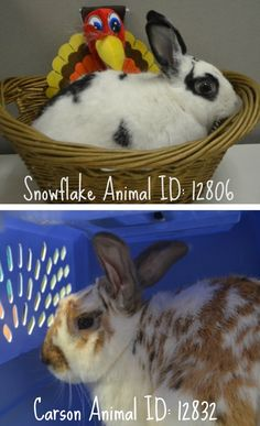 11.24.17 Meet SnowFlake Animal ID: 12806 @ Manhattan ACC and Carson Animal ID: 12832 @ Brooklyn ACC All Pets* *All ACC Shelters, All Weekend, Al... - Taylor Easton (Please Make Adoption Your Only Option) - Google+