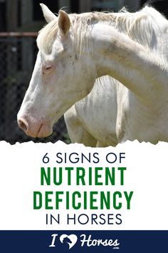 Nutrient deficiency in horses is something every horse owner needs to know about. Check out this list for the subtle signs. | #ihearthorses #eqlife #horsehealth #horseownertips #horsecare