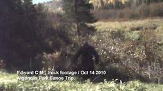 sighting of bigfoot while on a canoe trip in Algonquin Park Bigfoot Footage, Bigfoot Video, Bigfoot Photos, Pie Grande, Strange Beasts, Finding Bigfoot, Bigfoot Sightings, Myths & Monsters, Creepy Images