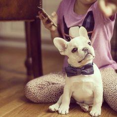 Good Morning ☕️❤️ French Bulldog Puppy