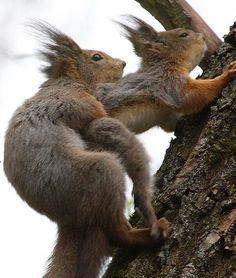 Squirrel Sex hair lol