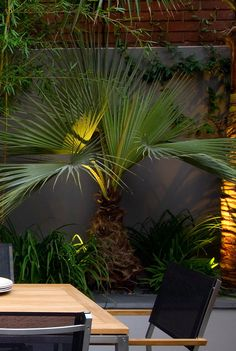 10 hints for using architectural plants in the design of contemporary garden planting