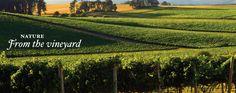 Dobbes Winery - best Pinot Noir in Oregon.
