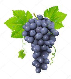depositphotos_3069137-stock-illustration-grape-cluster.jpg (917×1023)
