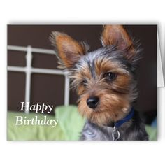 Yorkshire Terrier Dog Photo Happy Birthday Card Yorkie Cuts Hairstyles Puppy Cut