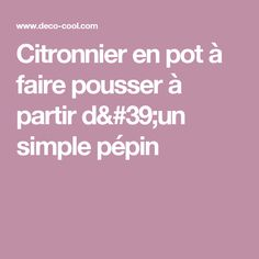 Citronnier en pot à faire pousser à partir d'un simple pépin