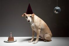 happy birthday dog- looking for the perfect birthday card for steve