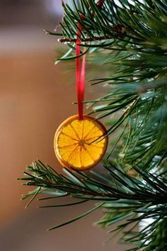Orange Christmas tree decorations - We have these on our tree Natural Christmas, Outdoor Christmas, Country Christmas, Homemade Christmas, Winter Christmas, All Things Christmas, Christmas Holidays, Christmas Oranges, Christmas Tree For Cats