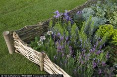 Willow fence enclosure with lavender