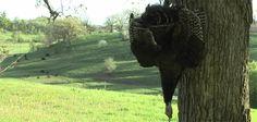 run & gun turkey hunting pays off Thunder Chicken, Crow Call, Wild Turkey, Turkey Hunting, Animal Games, Rifle Scope, Lion Sculpture, Wildlife, Guns