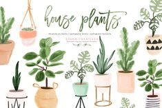 Watercolor House Plant Clip Art by Essem Creatives on @creativemarket