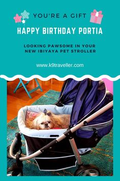 Are you looking for that special gift for your fur baby? Look no further! Ibiyaya have the best pets strollers, carriers and backpacks for pet parents who take their pets anywhere they go. 🐶🐾 Dog Stroller, Baby Strollers, Dog Birthday Gift, Walk Run, Dog Life, Special Gifts, Pet Dogs, Fur Babies, Pet Supplies