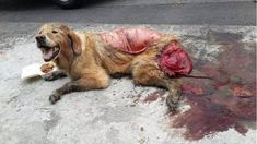 You know things are going to hell in your culture when this sort of brutality starts to become commonplace. Report animal abuse. ALL animal abuse.