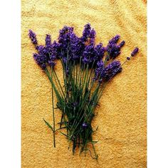 Lavender, can you smell it? ❤ liked on Polyvore featuring backgrounds