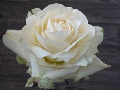 Robert Haynes sugar rose. Can you believe this is made of gum paste?