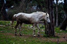 Horses are beatiful animals