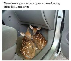 Funniest Animal Pictures Don't leave your door open when unloading groceries when you live in the country! ♡ deer ♡ twin fawns Sharing is caring, don't forget to share ! Funny Animal Pictures, Cute Funny Animals, Cute Baby Animals, Funny Cute, Animals And Pets, Cute Pictures, Animal Pics, Random Pictures, Hilarious Pictures