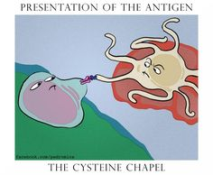 When immunology and art combine. APC presenting to a T cell.
