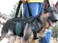 Give your #Tripawds the gift of great gear! Shop for the best harnesses, beds, toys and more at