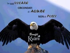 IF YOU WANT TO FLY SURROUND YOURSELF WITH EAGLES NOT WITH TURKEYS ! :)  #quotes #qouteoftheday #motivational #motivazionale #success #successo #polli #aquile #volare #kyaniitalia #livekyani #wellnesssimplified #beunstoppable #kyani #experiencemore #gokyani #jobopportunity #opportunitàlavorativa #opportunitàdilavoro #business #travel #opportunity  #healthyliving #health #benesseretotale #triangolodelbenessere #bellezza #salute #sport #fitness #wellness #naturalproducts #prodottinaturali #jobo