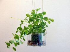 Kalasa och duka fram kvällens tilltugg i tomma glasljus eller plantera blommor eller örter i dem! #jar #garden #glasljus Nye, Plants, Flora, Plant, Planting