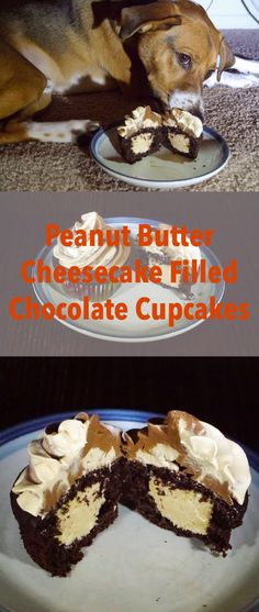 Cheesecake filled cupcakes that take a twist on Reese's cups. Chocolate cupcakes filled with no-bake peanut butter cheesecake. Cheese Cake Filling, Cake Filling Recipes, Cupcake Recipes, Dessert Recipes, Desserts, Cupcake Ideas, Baking Recipes, Easy Recipes, Chocolate Ganache