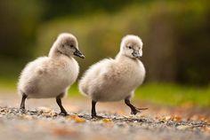 Милые птенцы на фото Роберта Адамека
