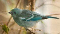 Fotos Aves