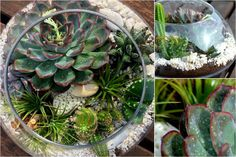 My garden with succulents