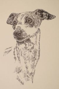 "Italian Greyhound: Dog Art Portrait by Stephen Kline - drawdogs.com These unique fine art 11""x 17"" lithographs, created by drawing the name of the breed over and over, are hand signed and numbered. He can even add the name of your dog into the art. His collectors number in the thousands from over 20 countries and every state in the US. Kline's dog art has generated tens of thousands of dollars for dog rescues worldwide."