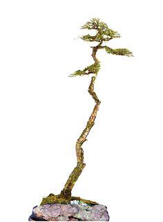 A Virtual Bunjin Challenge Winner Bonsai Art, Bonsai Garden, Prunus Mume, Juniper Bonsai, Single Tree, Potted Trees, Art Of Living, Tropical Flowers, Minis