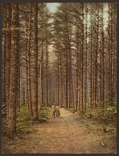 """liquidnight:Cathedral Woods, Intervale, White Mountains """" Photochrom, circa 1900 Detroit Photographic Company [From the Library of Congress] """""""