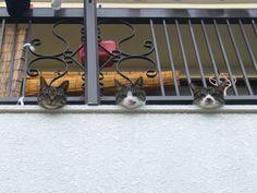 【二度見必至】 思わずギョッとしてしまいそうな3匹の猫の画像 : 〓 ねこメモ 〓