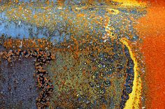 So creative to be able to see something beautiful in what others would consider junk. Rusted car.