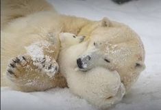 Lets look at the world Animals And Pets, Baby Animals, Cute Animals, Baby Polar Bears, Bear Photos, Love Bear, Mundo Animal, Animal Faces, Cute Animal Pictures