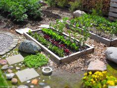 pihan istutukset,kasvimaa,puutarha,istutus,puulaatikko,kasvatus,istutuslaatikko,piha