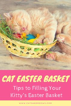 Your kitty will enjoy a Cat Easter Basket that was put together just for them? See our cat product tips here! Cat Care Tips, Pet Care, Pet Dogs, Dog Cat, Pets, Easter Cats, Cat Accessories, Cat Toys, Kitten Toys