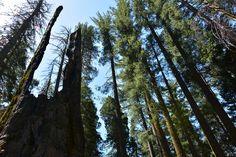 Yosemite Nationalpark. DieFernwehFamilie